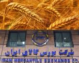 نگرانی کشاورزان با عرضه گندم در بورس پایان نیافت
