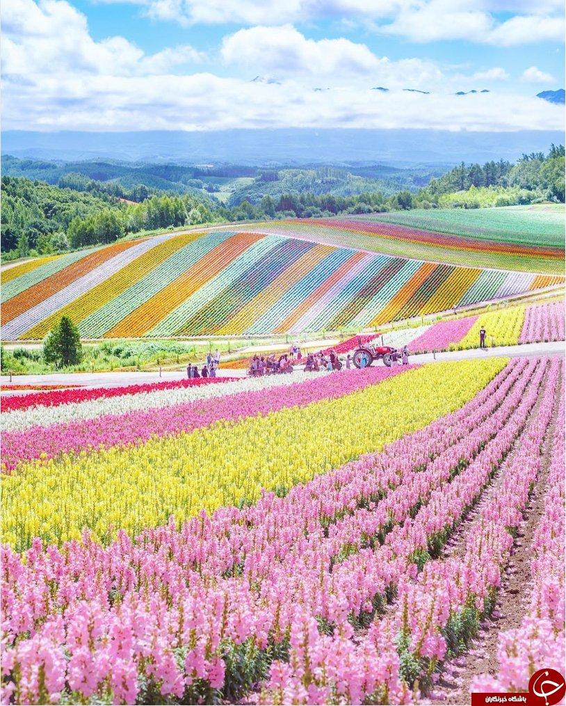 تصویری خیره کننده از دومین جزیره بزرگ کشور ژاپن