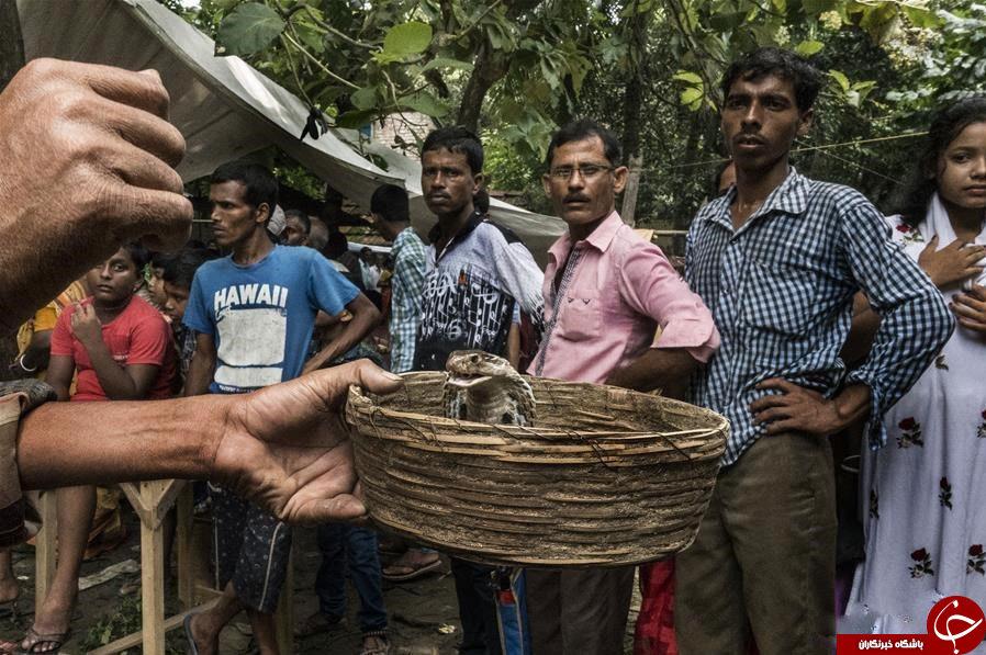 جشنواره مار در هند برگزار شد+تصاویر