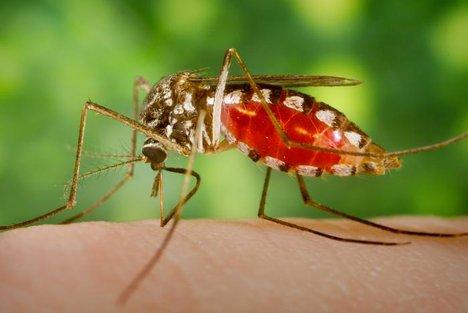 شناسایی موارد ابتلا به مالاریا در میان حجاج ۸ کشور,