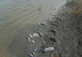 باشگاه خبرنگاران -مرگ و میر وسیع ماهی ها در استخر آزادی + فیلم