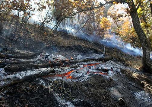 وقوع 49 مورد آتش سوزی در جنگل ها و مراتع گلستان