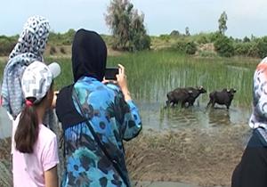 باشگاه خبرنگاران -پناهگاههای معروف استان مازندران را بهتر بشناسید + فیلم