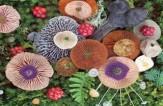 باشگاه خبرنگاران -قارچهای جادویی؛ هنر طبیعت