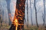 باشگاه خبرنگاران - تلاش برای اطفای آتش در منطقه اسک وش بخش لاریجان