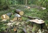 باشگاه خبرنگاران -تخریب جنگل عامل اصلی وقوع سیل در استان گلستان + فیلم