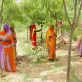باشگاه خبرنگاران -رسم جالب قبیله هندی! +عکس
