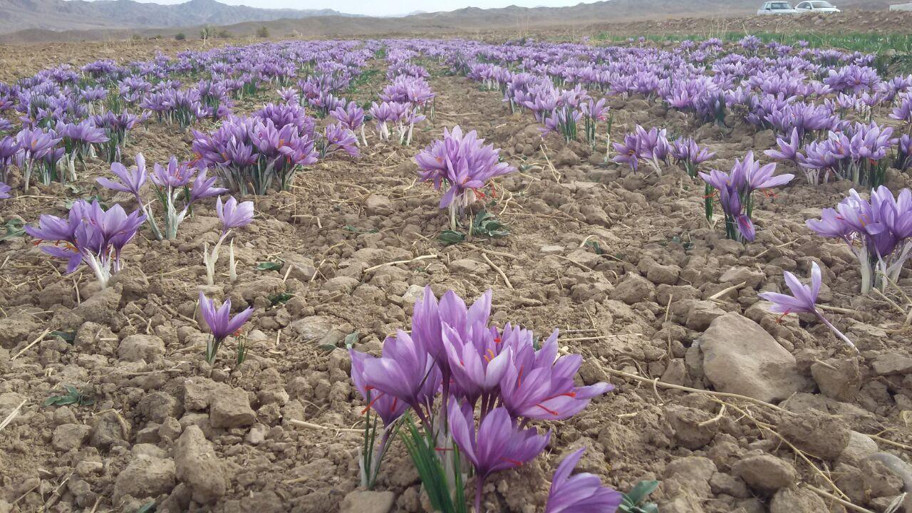 میراث سه هزار ساله ایرانیان به یغما رفت