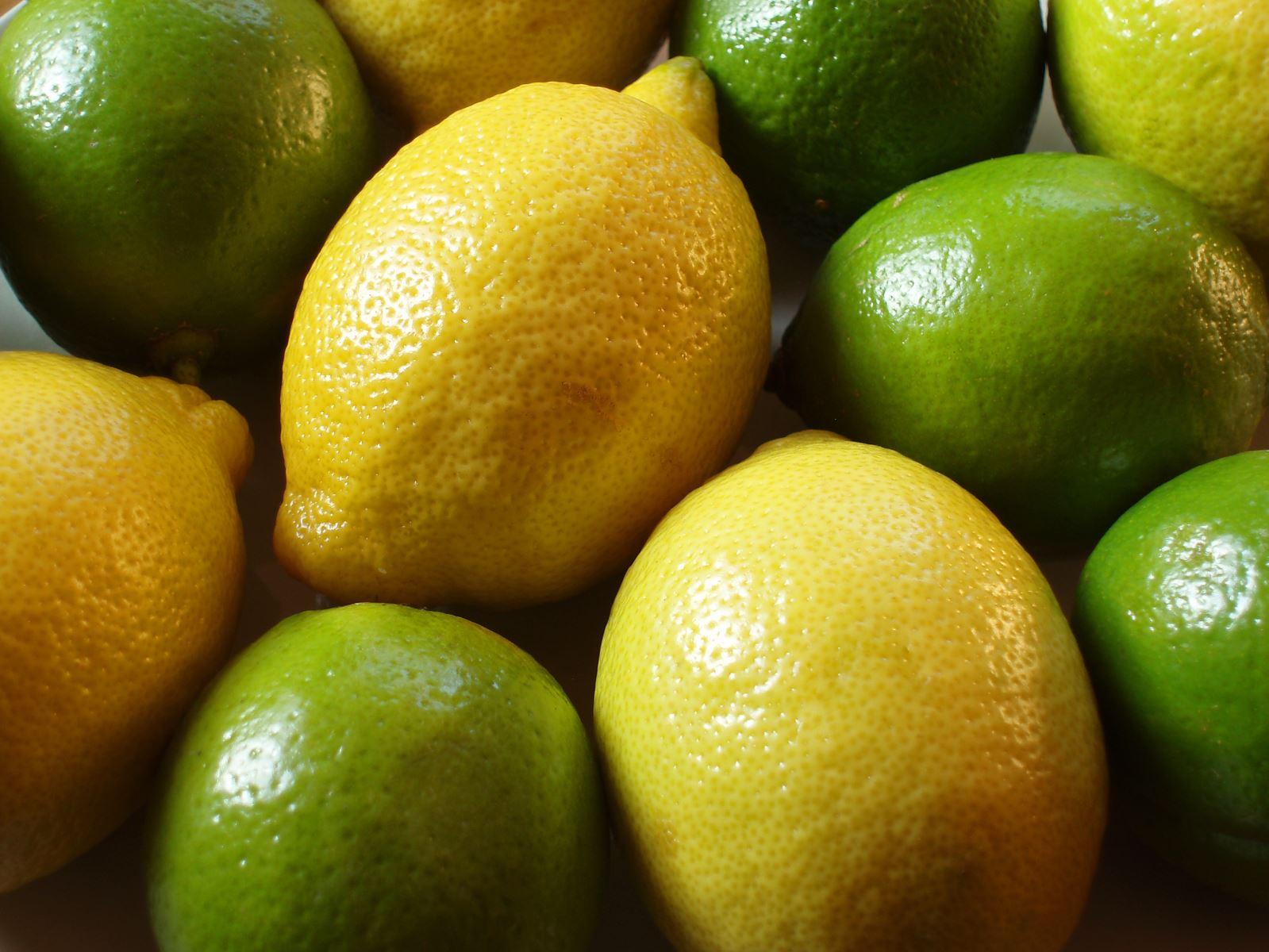 افزایش تولید لیمو ترش در راه است/ ضرورت مدیریت آفت جاروک