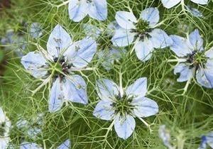 گیاهی که پیامبر(ص) آن را درمانی برای هر بیماری معرفی کردند