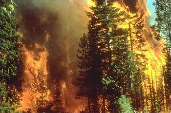 مهار آتش سوزی در جنگلهای کجور