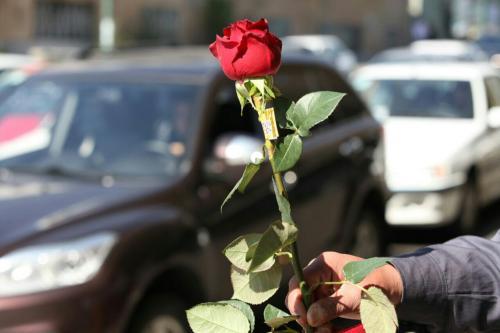عرضه گل شاخه بریده با ۴۰ درصد تخفیف در تقاطعهای ر تقاطعهای سطح شهرمشهد