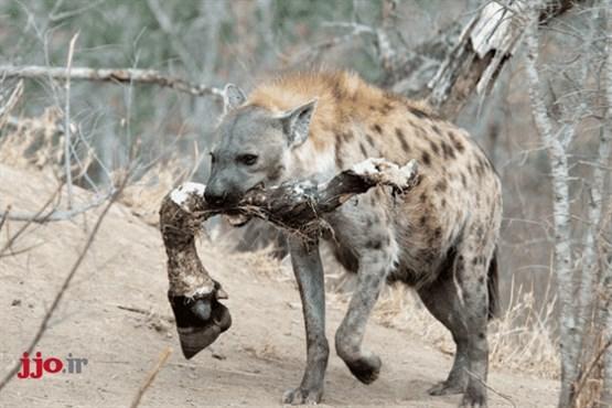 با مرگبارترین موجودات روی کره زمین آشنا شوید + عکس