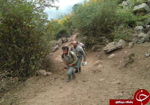 بانگ بقای بزرگترین گوزن ایرانی در دل جنگل های هیرکانی + تصاویر