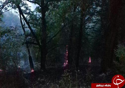فاجعه سرخ گریبانگیر جنگل های غرب و شرق مازندران