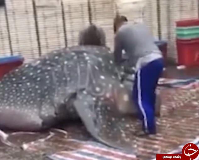 فروش نهنگ غولپیکر در بازار ماهیفروشان چین +تصاویر