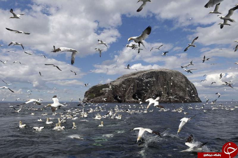 بازدید از مرکز پرندگان دریایی در اسکاتلند