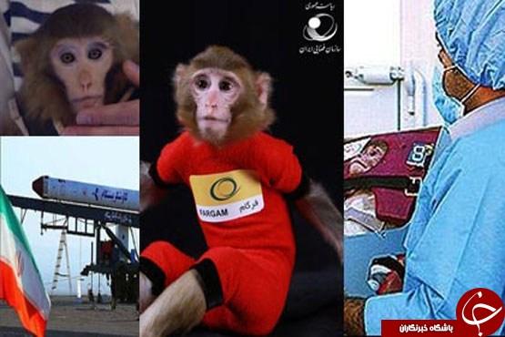 بچه، میمون های فضایی ایران متولد شد+ عکس