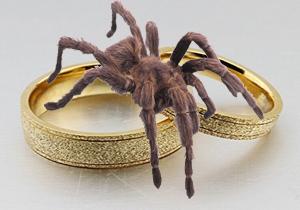 عنکبوتی که ماه عسل را به کام عروس زهر کرد+تصاویر
