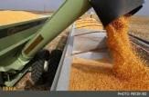 باشگاه خبرنگاران -روسیه در سال 2017 بزرگترین صادرکننده گندم در جهان خواهد بود