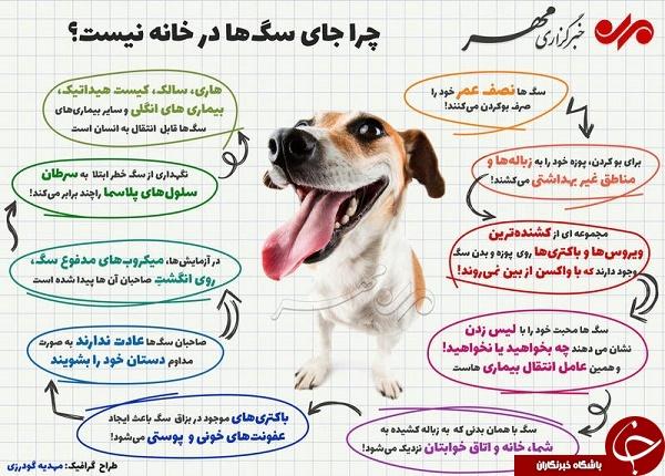 چرا جای سگها در خانه نیست؟ +عکس