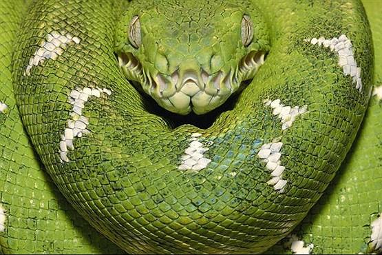 با خطرناکترین موجودات روی کره زمین آشنا شوید+تصاویر