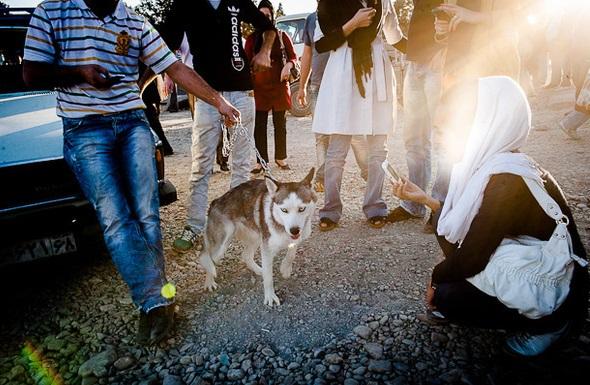 پرستار سگ می شوم تا تنها نمانم / زنگ هشدار گسترش خلأ عاطفی در جامعه مدرن