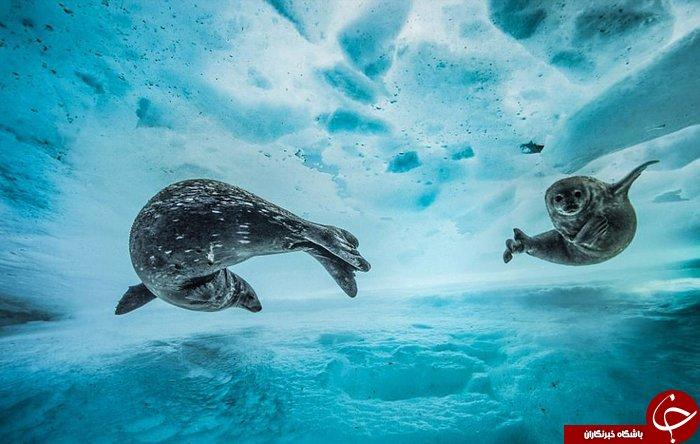 تصاویری بی نظیر از دنیا زیر آب