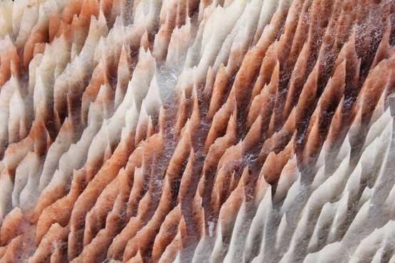 ضیافت باشکوه کریستالهای نمک +تصاویر