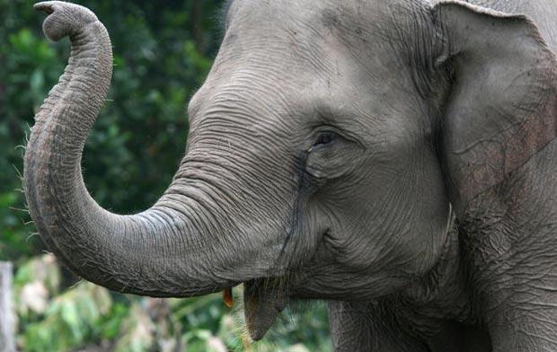 حملهور شدن یک فیل به ماشین برای خوردن غذا + فیلم