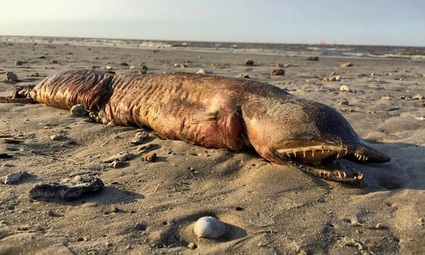 ماهیت حیوان دریائی عجیب آمریکا معلوم شد