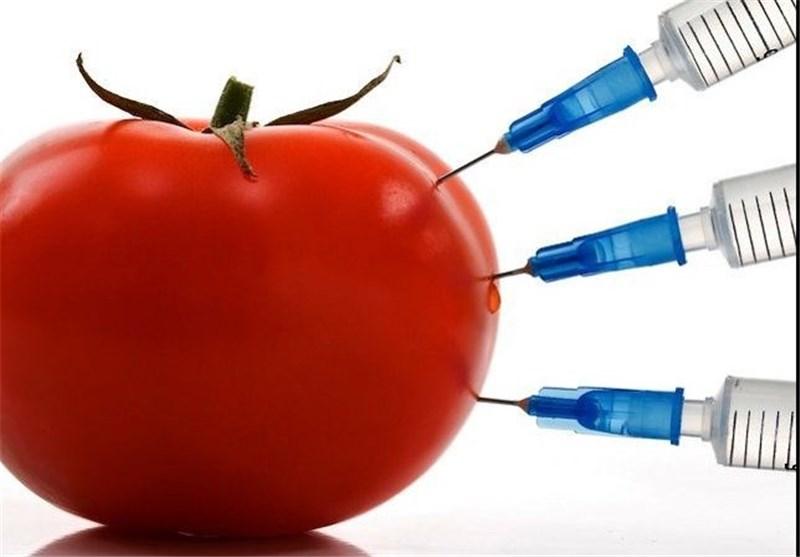 کشمکش مسوولان بر سر تولید محصولات تراریخته/توسعه کشاورزی ارگانیک باید مد نظر قرار گیرد