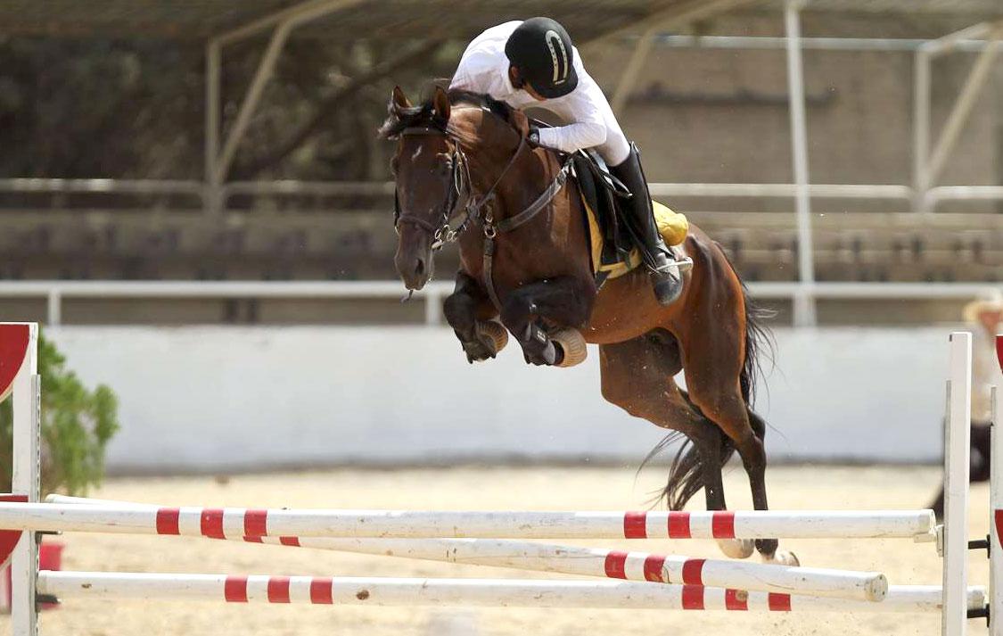 برگزاری رقابتهای پرش با اسب هییت سوارکاری همدان