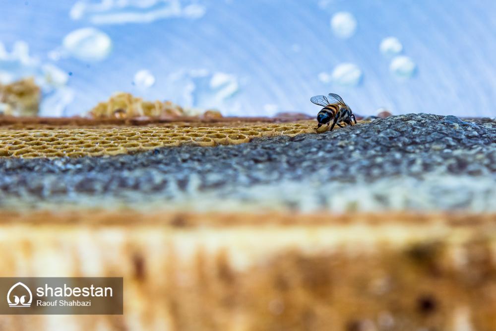 زندگی با طعم عسل+تصاویر