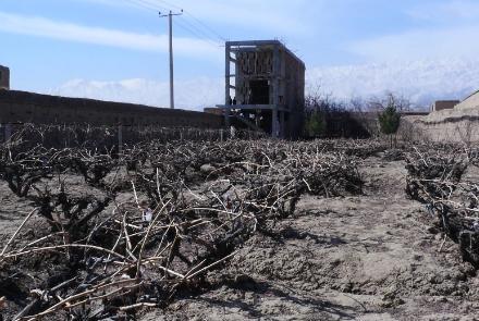 سالانه میلیونها هکتار زمین از کشت باز میماند