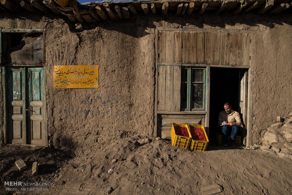 پایتخت زغال اخته ایران اینجاست+تصاویر