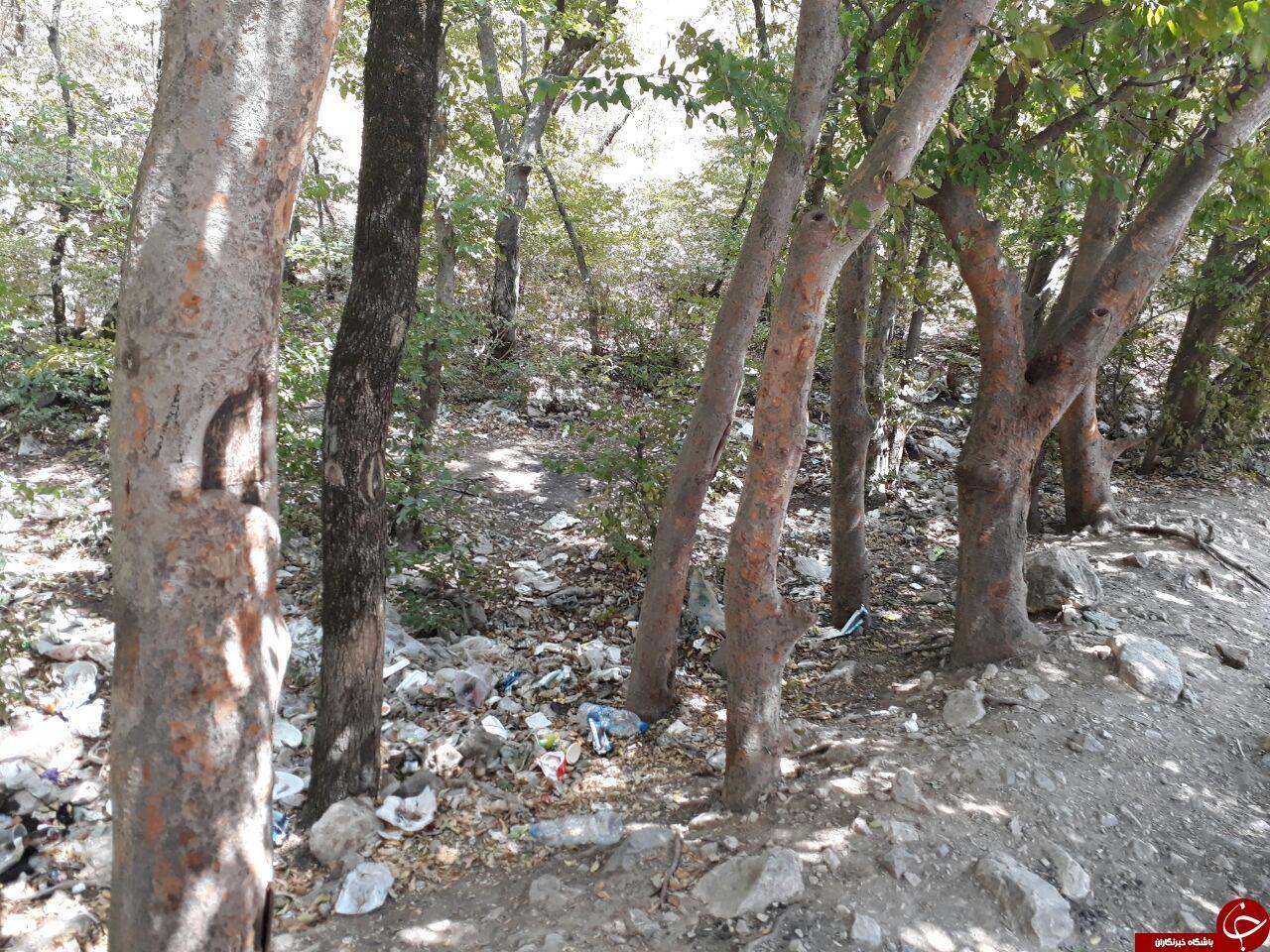چهره ناخوشایند زباله در پارک ملی گلستان + تصاویر