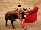 باشگاه خبرنگاران -اروپا مهد حیوانآزاری/اسپانیا منزجرکنندهترین مراسم گاوبازی را برگزار میکند + فیلم و عکس