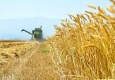 باشگاه خبرنگاران - حکایت مزرعه دارانی که از پارسال مانده و از امسال رانده شده اند + فیلم