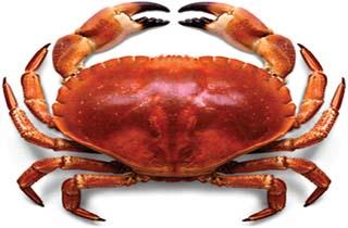 نتیجه تصویری برای خرچنگ