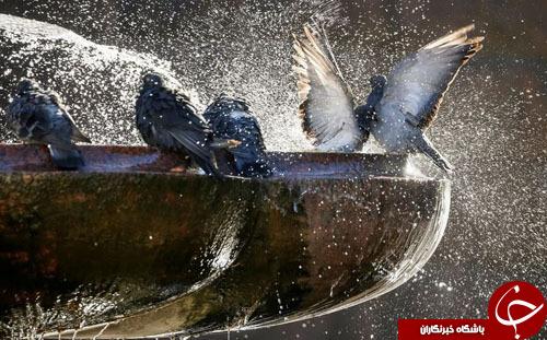 تصاویر روز: از نورافشانی بر روی برج آزادی تا شنا کردن با یک فک دریایی