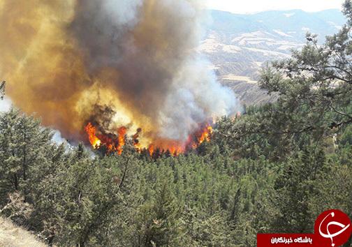 درخواست کمک برای مهار آتش جنگلهای شرق گلستان + عکس