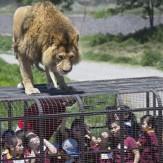 باشگاه خبرنگاران -در این باغ وحش انسانها در قفسند +عکس