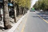 باشگاه خبرنگاران -اختلالات نوری علت خشک شدن درختان خیابان ولیعصر(عج)