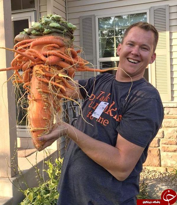 بزرگترین هویج جهان در حیاط خانه مرد سبز انگشتی+تصاویر