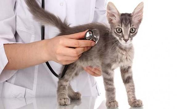 از جراحی زیبایی حیوانات خانگی تا عمل حنجره سگ!/ حیوانات را زجرکش میکنند و میگویند: «به آنها علاقه داریم»!