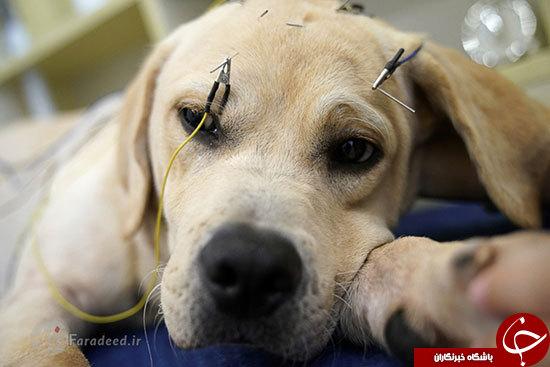 درمان حیوانات با طب سوزنی + تصاویر