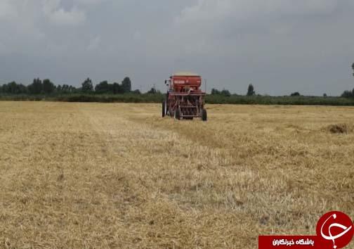 خاک ورزی حفاظتی دروازه ورود به کشاورزی پایدار