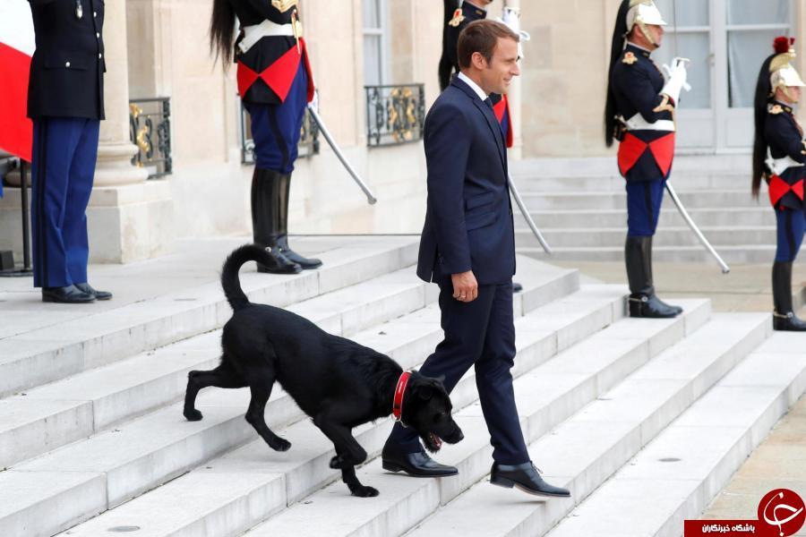 رئیسجمهور فرانسه سگ اول این کشور را از پناهگاه تحویل گرفت+ تصاویر