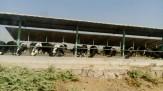 باشگاه خبرنگاران -سهم 20 درصدی دامداریها در انتشار بوی نامطبوع در اطراف فرودگاه امام خمینی(ره)